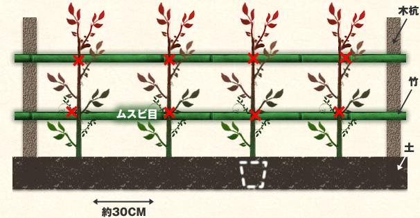 日当たりから半日陰の場所が良く土質は選びませんが多少堆肥を入れて30cm間隔ぐらいに植えて下さい。始めは竹垣などで支えると良いでしょう。5月と9月の2回、伸びすぎた枝を刈り込み少量の追肥をすると一年中赤い新芽が楽しめます。